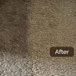 carpet-cleaning-sydney-01