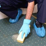 sydney-carpet-cleaning